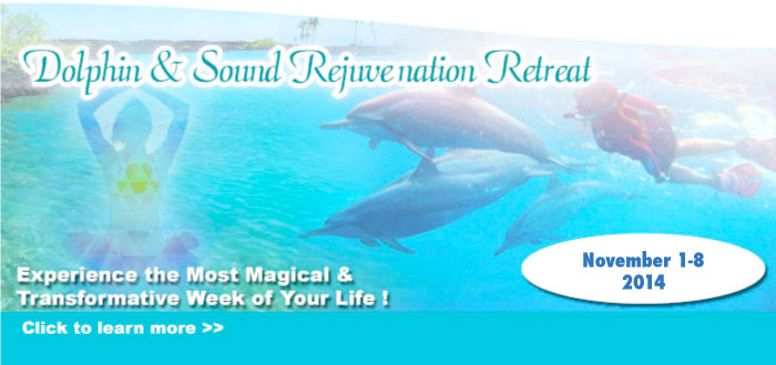 Dolphin Retreat