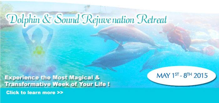 Dolphin Retreat